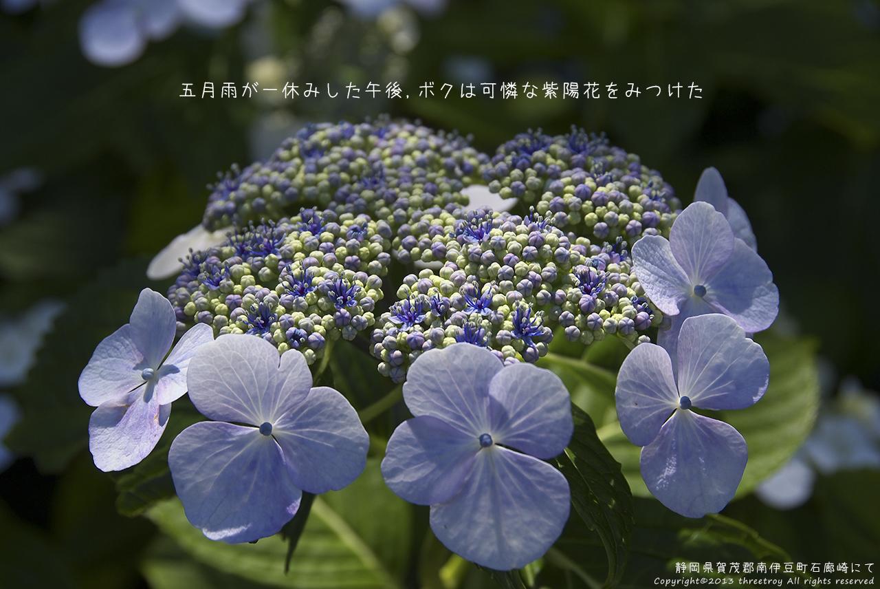 http://www.threetroy.com/blogdata/ikku1280/DSCF1486.jpg